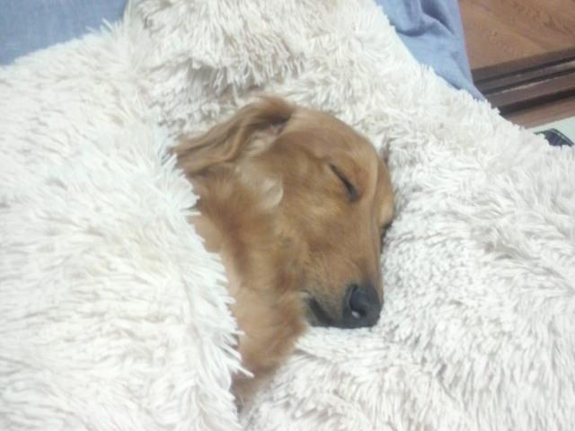 レオン寝顔
